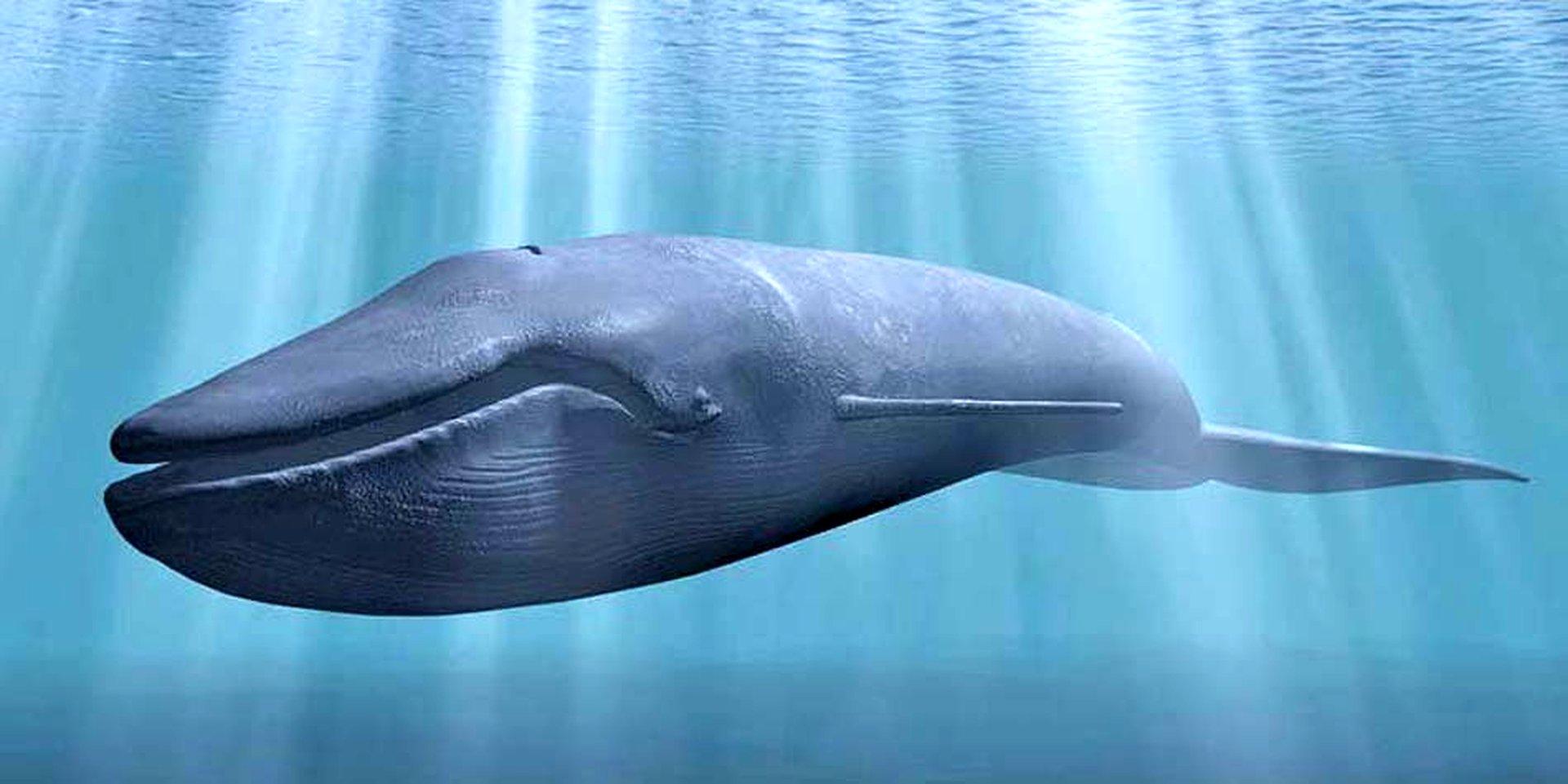 все виды китообразных картинки тоз-бм имеет точно